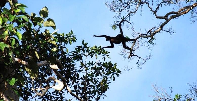 Manu Birding Tours Peru
